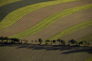 field with tree line_0788